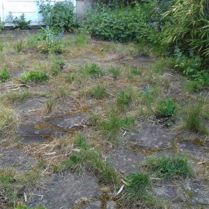 Garden clearance Barnes before